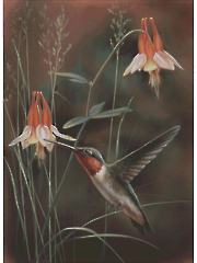 Hummingbird and Columbine Counted Cross Stitch Pattern