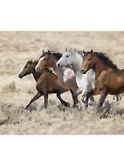 "Bluff Horses Digital Panel 36"" x 44"""