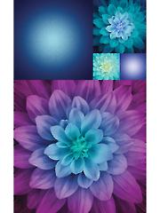 "Aurora Kablooms Digital Panel 27"" x 44"""